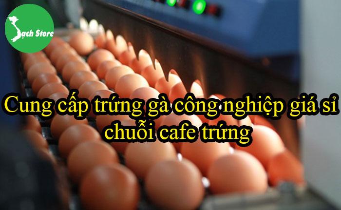 Cung cấp trứng gà công nghiệp giá sỉ chuỗi cafe trứng